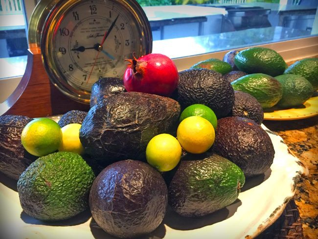 many ways to eat avocado fresh off the tree harvest gluten free