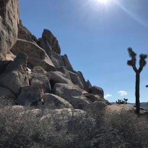 sage spirit west coast book launch palm springs joshua tree national park