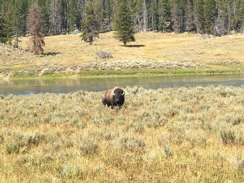 how the west won my heart yellowstone national park chief joseph scenic byway